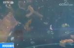 """""""海洋里的PM2.5""""污染来袭 监测结果显示微塑料污染不容乐观"""