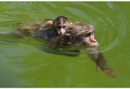 这么热的天,动物可怎么过?别担心,有淋浴还有冷饮吃