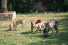 杭州整治養犬:大型犬不得出戶,遛犬不牽繩最高罰1千