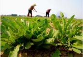 春天吃什么食物 8种应季菜都是养生能手