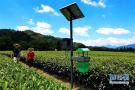 石家庄发布上半年主要农作物病虫害发生趋势