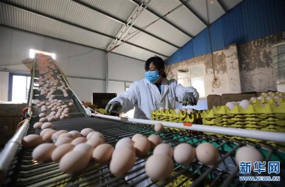 河南武陟:稳定畜禽生产 保障市场供应