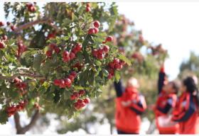 中共中央 国务院发布《关于全面加强新时代大中小学劳动教育的意见》