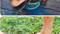 台北高中生集体虐龟 拍照上传网站炫耀