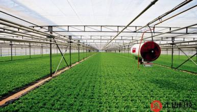 缩节安和新型植物生长调节剂-壮安灵在农业生产中的应用