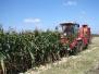 8年保护性耕作 胶州玉米地亩产达900公斤