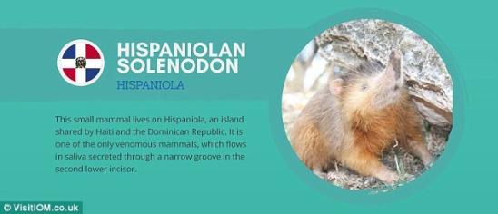 世界岛屿造就奇特动物:眼镜猴眼睛比脑容量还大