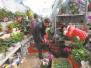 花鸟市场年后开市 草花类盆栽最受欢迎