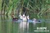 绿水青山好生态 河北迁安成众多野生鸟类栖息地