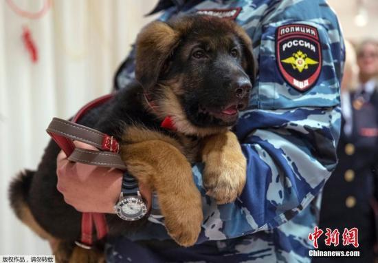 巴黎 法国 警犬/核心提示:美国俄克拉何马州史蒂文郡(Stephens County)警长办公...