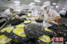 塑料紫菜引起市场关注:或导致紫菜加工业损失亿元