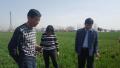省植保站吕国强副站长一行到平顶山市检查指导小麦条锈病普查与防控工作