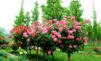郑州定了个小目标 今年新建24个公园游园年底前开放