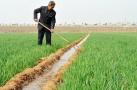 河北省发布冬小麦适宜播种期预报