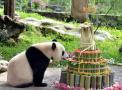 海归大熊猫迎4岁生日