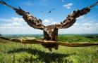 英鸟类摄影大赛作品