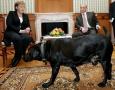 各国领导人都喜欢啥狗