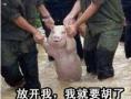 猪队友喊你打麻将