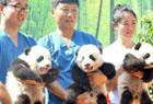 大熊猫公开征名