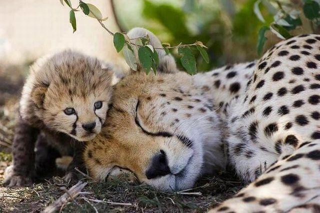 香!让宝宝多睡一会儿