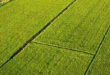 人民日报:为农服务不能只是耕种收 短板亟待补齐
