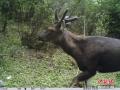 野生动物摆pose
