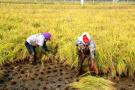盘锦市大洼区:认养农业彻底改变了农民的生活
