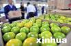 冬季柑橘类水果为何这么受欢迎?