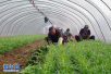 到2020年 山东蔬菜播种面积基本稳定在3200万亩