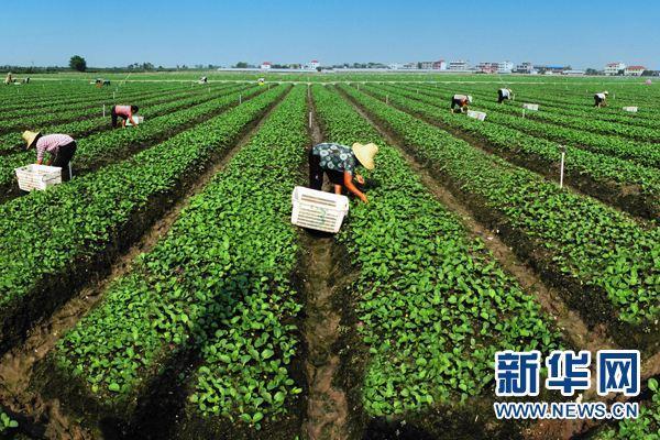 """9159澳门游艺:山东将完善农业""""新六产""""发展利益联结机制"""
