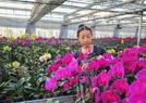 花卉大棚种出致富路