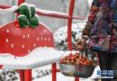 草莓小镇红火引客来