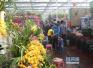 春节假期 保定市花卉市场购销两旺带火新春