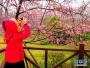 看樱花不用去日本 上海樱花节即将揭幕