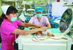 哈尔滨女婴全身大换血出生3天迈过3道坎