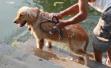 苏州养犬管理条例修订草案:每户限养一条、全市禁养大型犬