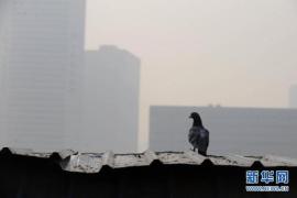 焦作部分工地污染严重