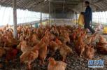 保定小伙儿张启航:放弃百万年薪回乡创办智能养鸡场