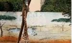 长颈鹿头卡树杈死亡
