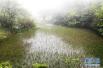 """探访五里坡国家级自然保护区:在巫山东北部的""""无人区""""寻""""宝"""""""
