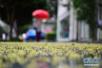 下周青岛天气以多云为主 高考最后一天有阵雨