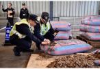 南宁海关在中越边境查获涉嫌走私入境活体穿山甲16只