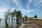 初秋的巢湖蘆溪濕地