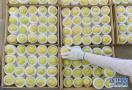 河北遵化:香白杏畅销助农增收