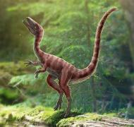 30厘米的恐龙长啥样?中国科学家发现新物种