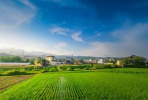 """守住""""三農""""戰略后院  ——盤點2019年農業農村發展亮點"""