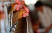 北京今年已报告19例H7N9感染病例 明显高于往年