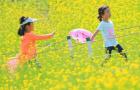 瀋陽北陵公園油菜花海綻放 小朋友們提前過六一