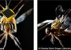 """蜻蜓化身间谍机器小虫背上安装电子""""小书包"""""""