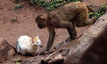 昆明动物园猴山遭鼠灾